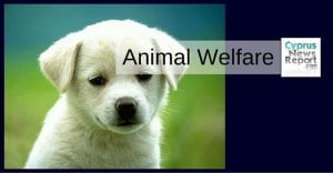 cyprus animal welfare