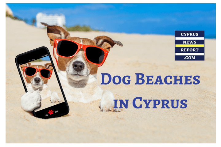 cyprus dog beaches