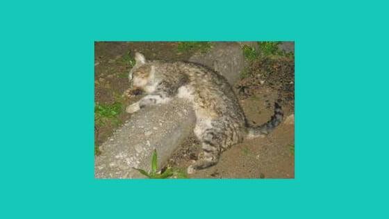 cat poisonings kakopetria